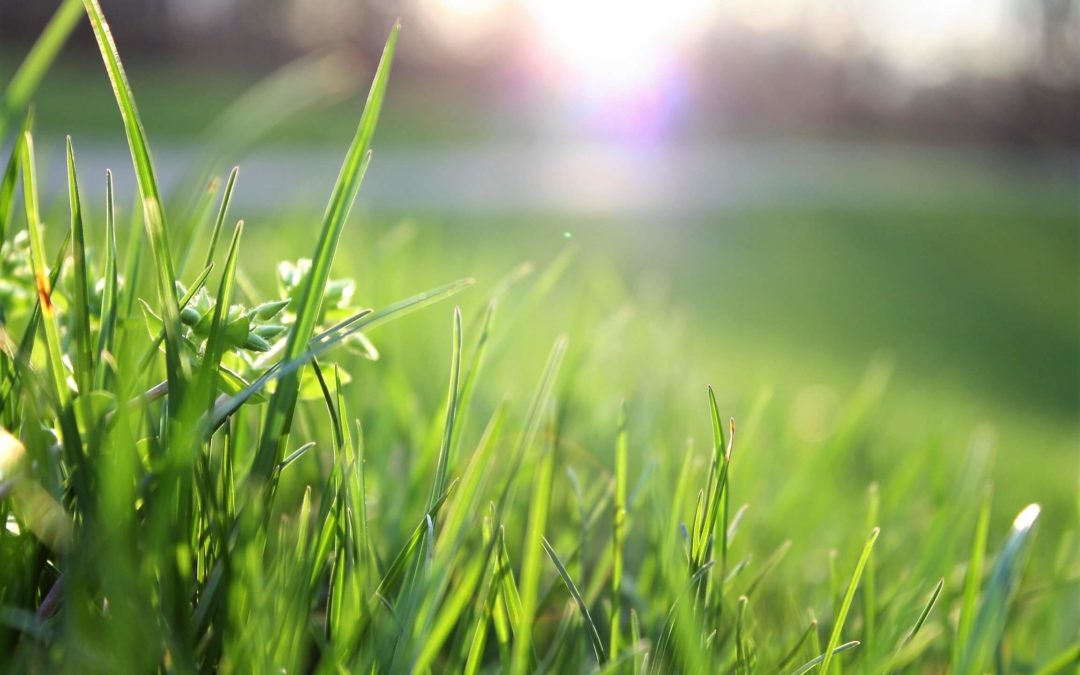 Thinking Ahead: Purdue University Develops Turfgrass Problem Diagnosis App